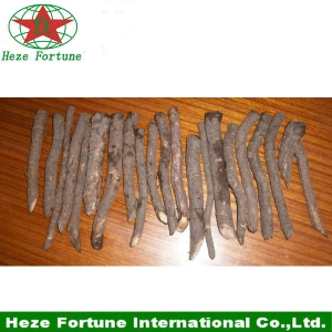 1000pcs up to 99% survive paulownia root free shipping by DHL