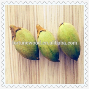 Fast growing rate cold resistant paulownia shan tong seeds for planting