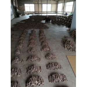 Fresh new 2018 paulownia shantong hybrid 9501 root cutting cold resist for wood production