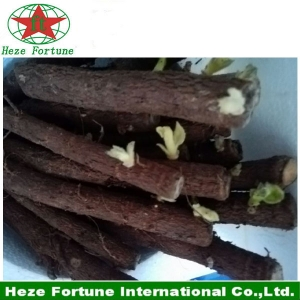 Paulownia shan tong roots for planting