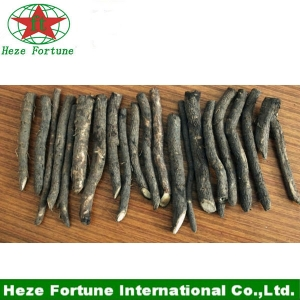 Wholesale paulownia hybrid 9501 seed root cutting