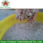 China 100% pure Paulownia seed hybrid 9501 factory