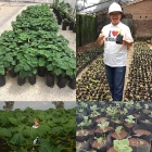 China China new paulownia hybrid FTE root best for cold weather with certificate fábrica