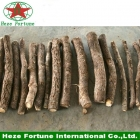China Hybrid 9501 paulownia roots cutting for planting factory