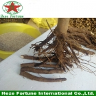 China Hybrid paulownia shan tong roots stumps factory