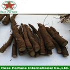 China Top growing rate best species hybrid 9501 roots cutting for germination fábrica