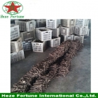 China high survive rate cheap paulownia plant tree root factory