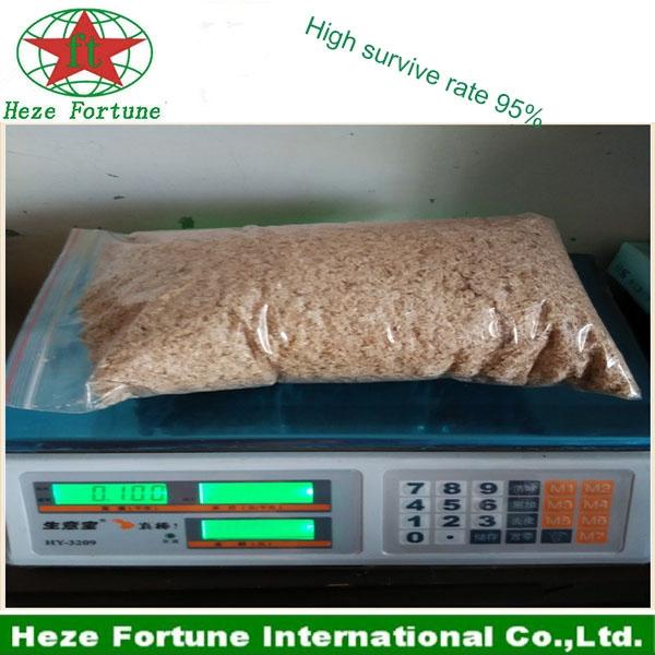 Hybride shantong graines paulownia for Arbre d ombrage croissance rapide